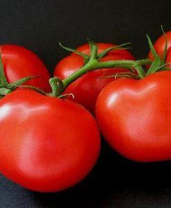 Ace 55 VF - tomat