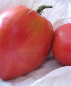 Anna Russian - tomat