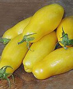 Banana Legs - plommontomat