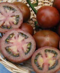 Black Russian - tomat