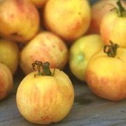 Garden Peach 2