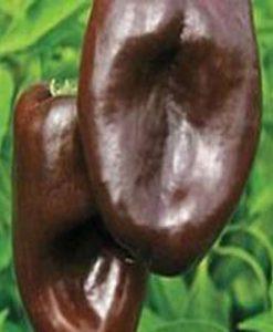 Mulato Isleno - chili