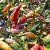 Numex Omnicolour - chili