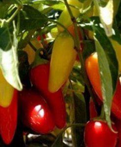 Numex Pinata - chili