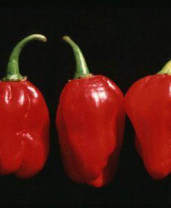 Numex Suave Red - chili
