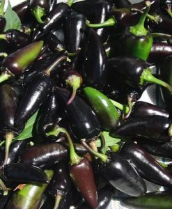 Serrano Purple
