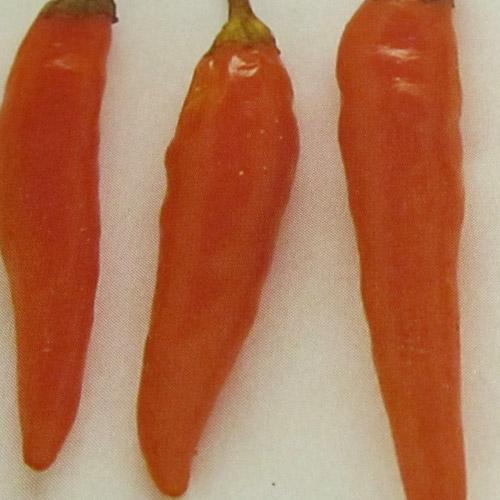 Cayenne Orange - chili