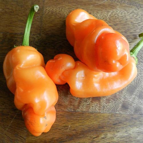 Peter Pepper Orange - chili