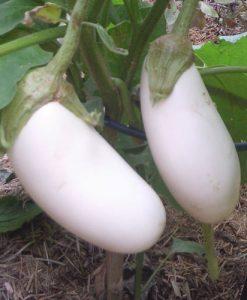 Casper - aubergine