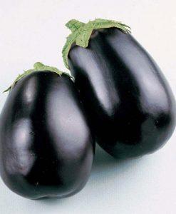 Black Beauty - aubergine