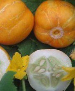 Crystal Lemon - äpplegurka