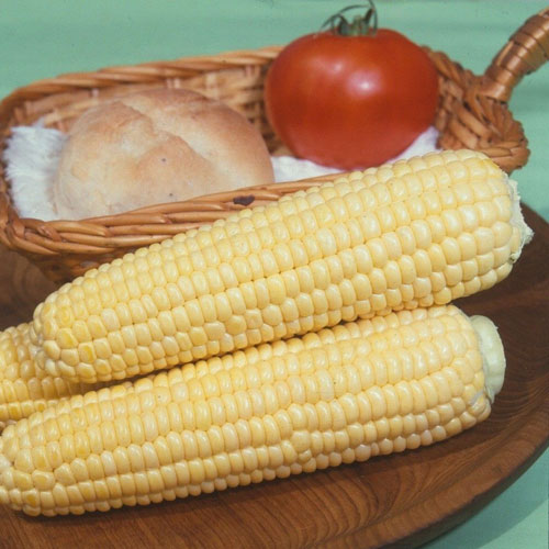 Golden Bantam Eko - sockermajs