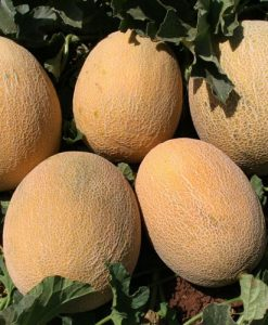 Ananas - melon