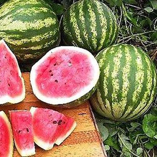 Cal Sweet - vattenmelon