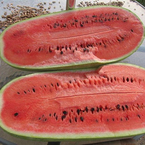 Charlston Gray - vattenmelon