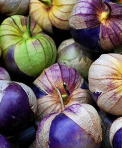 Tomatillo Purple - Physalis