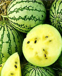 Petite Yellow - vattenmelon