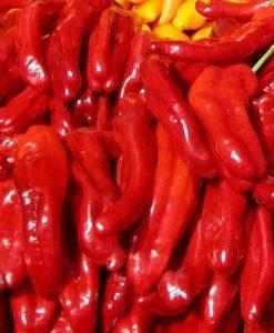 Rokita - chili