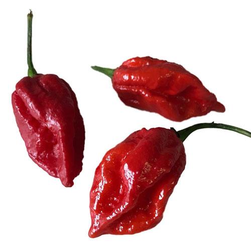 Naga Viper - chili