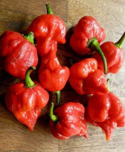 Trinidad Scorpion Butch T - chili